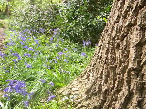 Trunk with bluebells