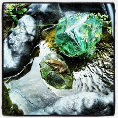Frog in waterfall on old tv glass