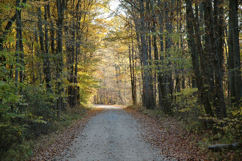 Yellowwood State Forest