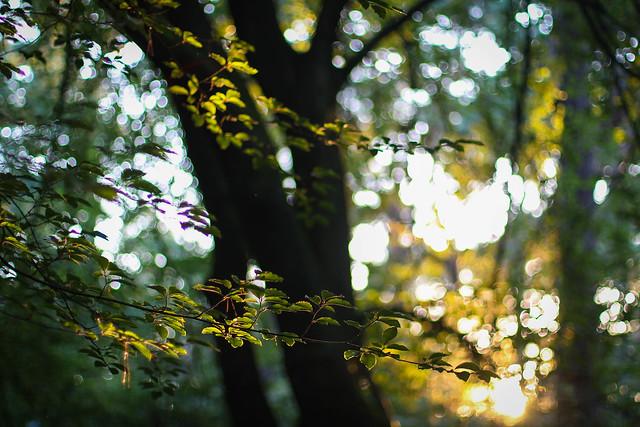 Belonging to the Light