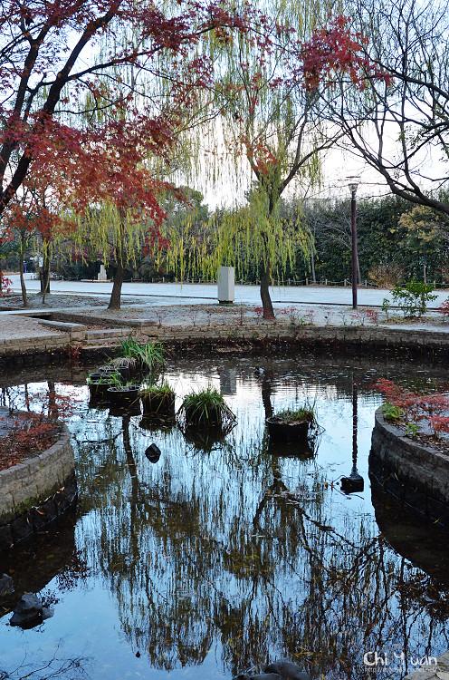梅小路公園04.jpg