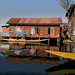 Cartoon - Yellow shikara in front of a run down area of houses in the Dal Lake in Srinagar