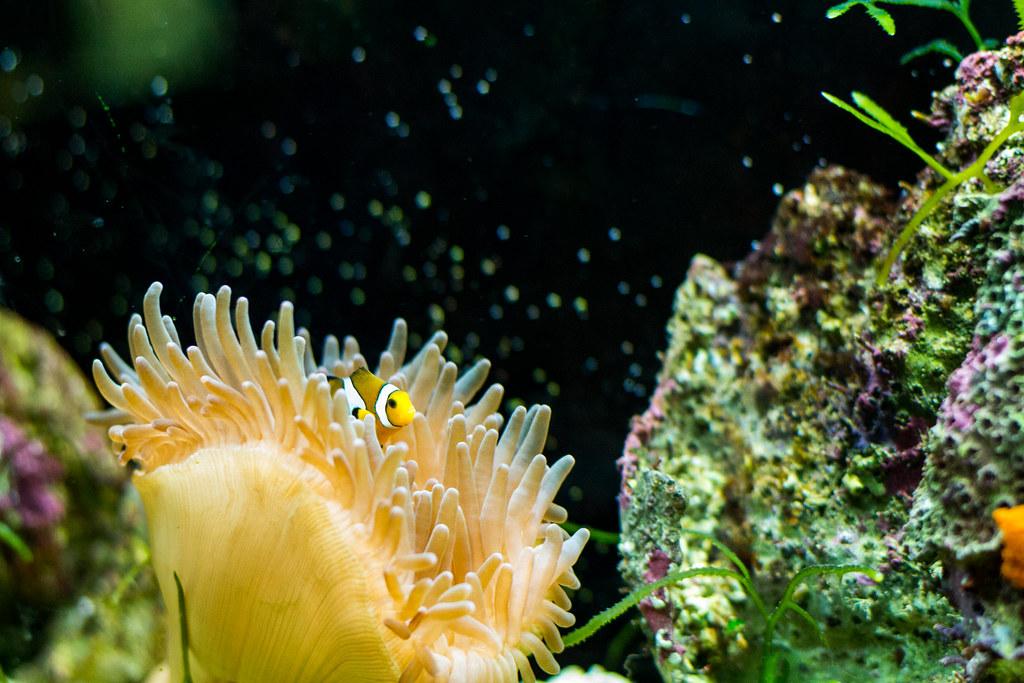 aquarium du grand lyon lyon aquarium du grand lyon