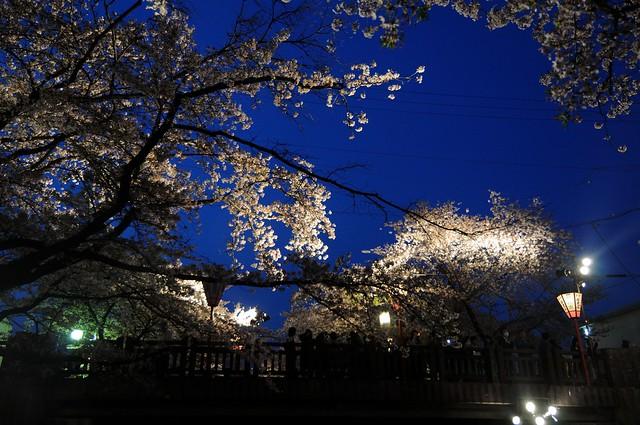 岩倉 五条川河畔の桜