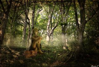 En forêt, êtes vous bien surs d'être seuls ...
