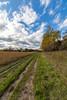 Path to Autumn by Daniel-Godin
