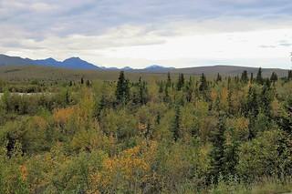 Denali NP ~ Tundra Wilderness - HTMT!