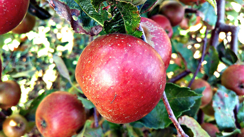 Apple day 2016-apple3