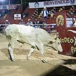 Rodeo Xtream