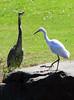 Heron & Egret by Hawkeye2011