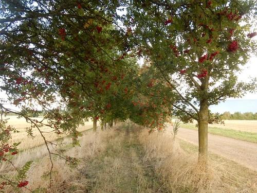 Rowan Walk