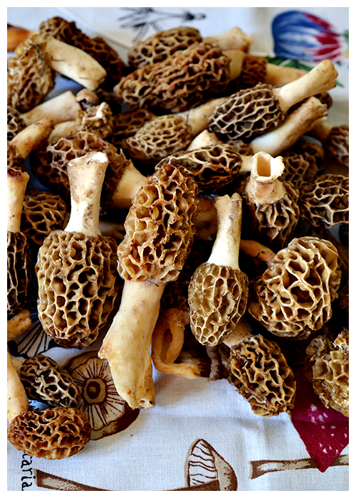 Morel Mushrooms© by Haalo