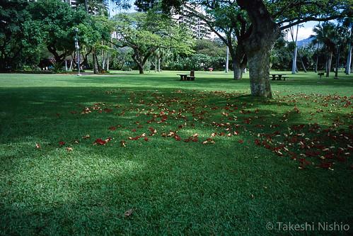 落ちた赤と黄の花 / Fallen red and yellow petals