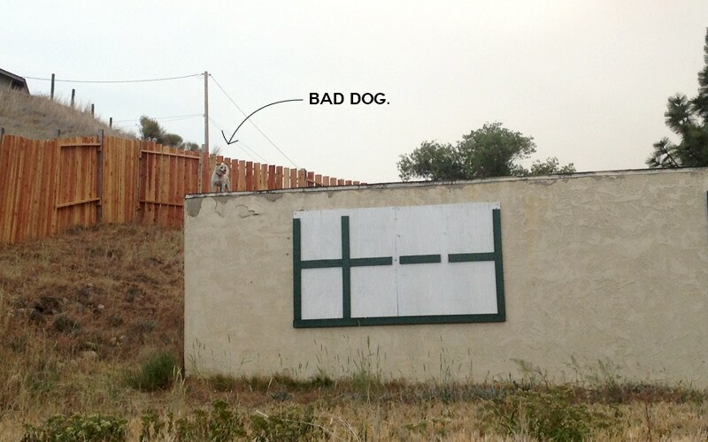 fence-dogs4bad
