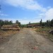 Small photo of Hansville Highway clear cut