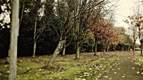 morning autumn trees ireland plant tree fall leaves forest landscape outdoors nokia colours outdoor path ngc trail 625 lumia iso500