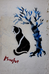 Street of Paris - Cat and the tree