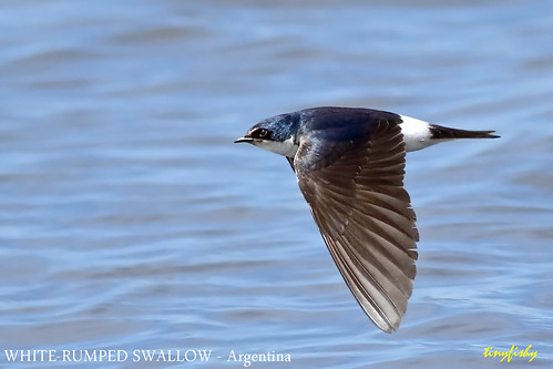 Autor: tinyfishys World Birds-In-Flight
