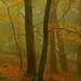 Autumn Beechwoods, Exmoor, UK by EmPhoto.