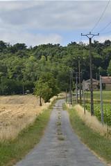 Route secondaire vers un bois