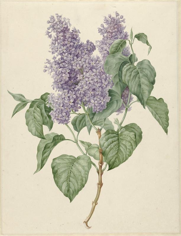 Πασχαλιές Maria Geertruyd Barbiers-Snabilie, 1786 - 1838