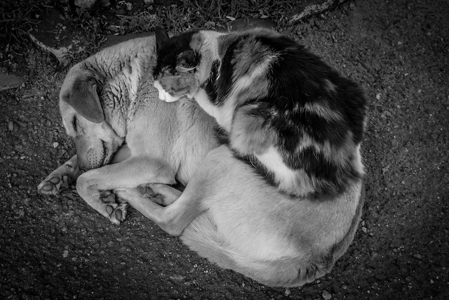 Best Friends - Bodrum, Turkey