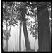 tree stand in fog by poetryraingirl