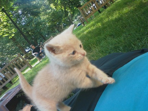 Kitten at the park!