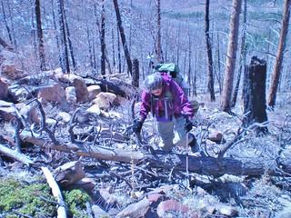 Linda Navigating the Forest Falderal