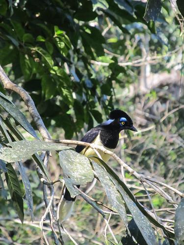 Les chutes d'Iguazu: Monsieur le Punk