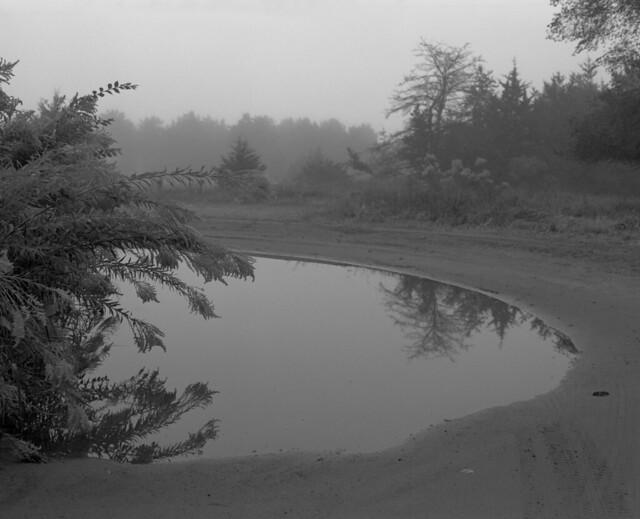 foggy montissippi morning