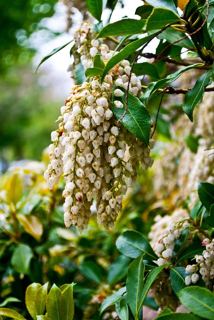 365-302 Flower Bells