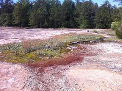 Sediment Pool
