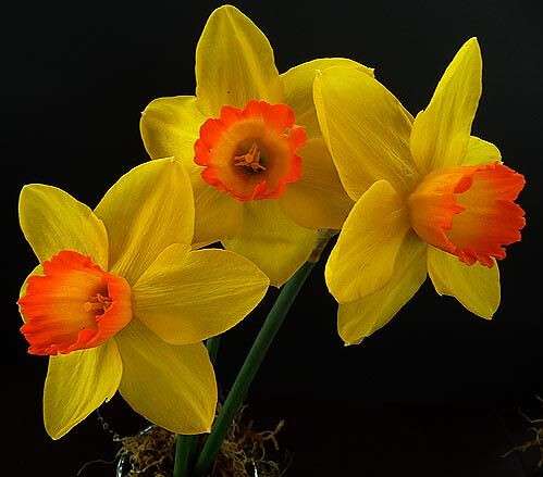 yellow_flowers _2