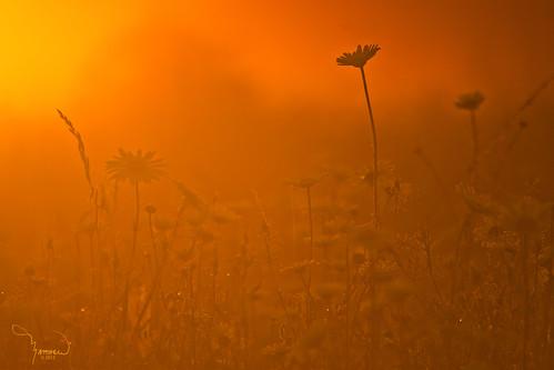 mist flower nature silhouette fog sunrise canon landscape washingtonstate t1i matthewreichel