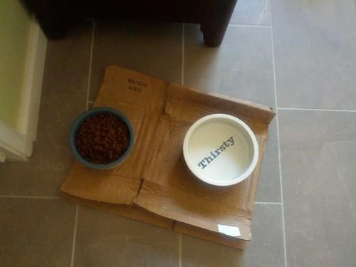 dog bowls, before
