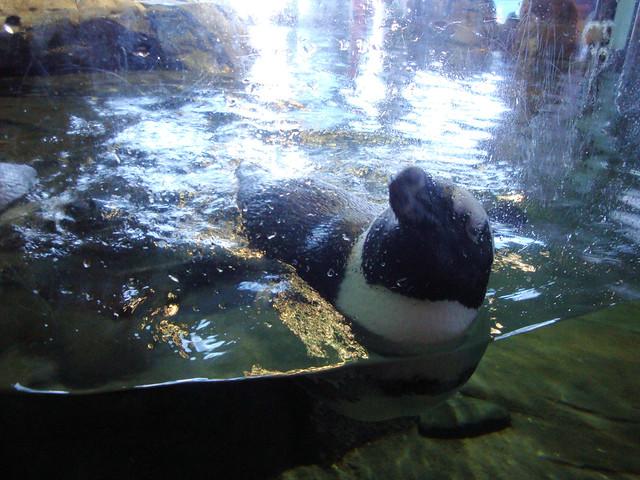 Foot Aquarium How Thick Should Glass Be