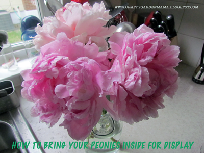 How to Bring Peonies Inside for Display
