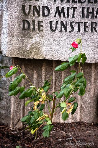 Vienna:monumento alle vittime del nazismo