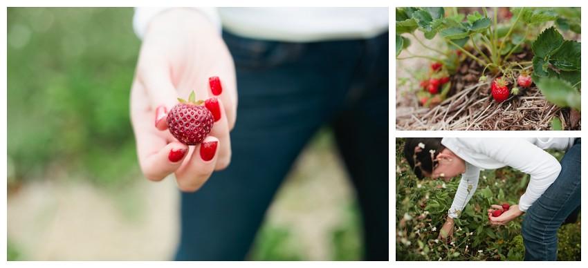 strawberries_005