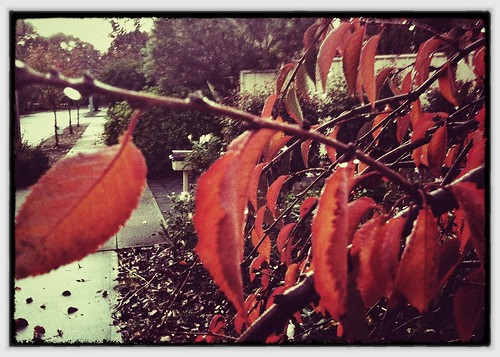 Last gasp of autumn. Day 156/366.