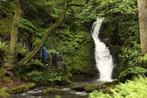 Around Dolgoch Falls - June 2012