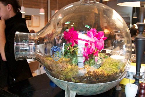 terrariums make everything better