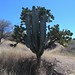 Two large cacti melded into one - Dos tipos de cactus hecho uno; Puebla, Mexico por Lon&Queta