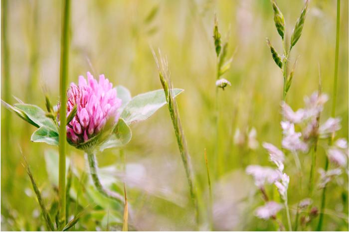 {summer} grass