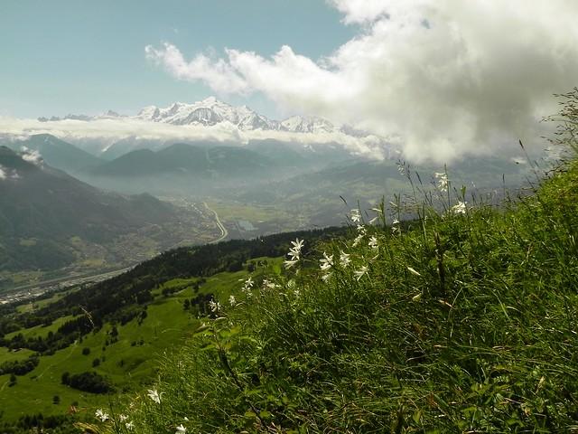 Lis de St Bruno et Mt Blanc