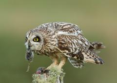 Birds of Prey & Owls