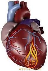 قلب طفل