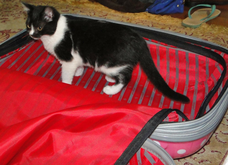 fazendo as malas