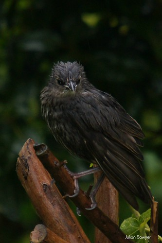 Not A Fan Of The Rain Then? by julian sawyer